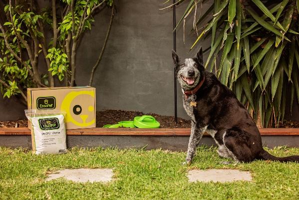 Dog installed box starter__0961-851.jpg
