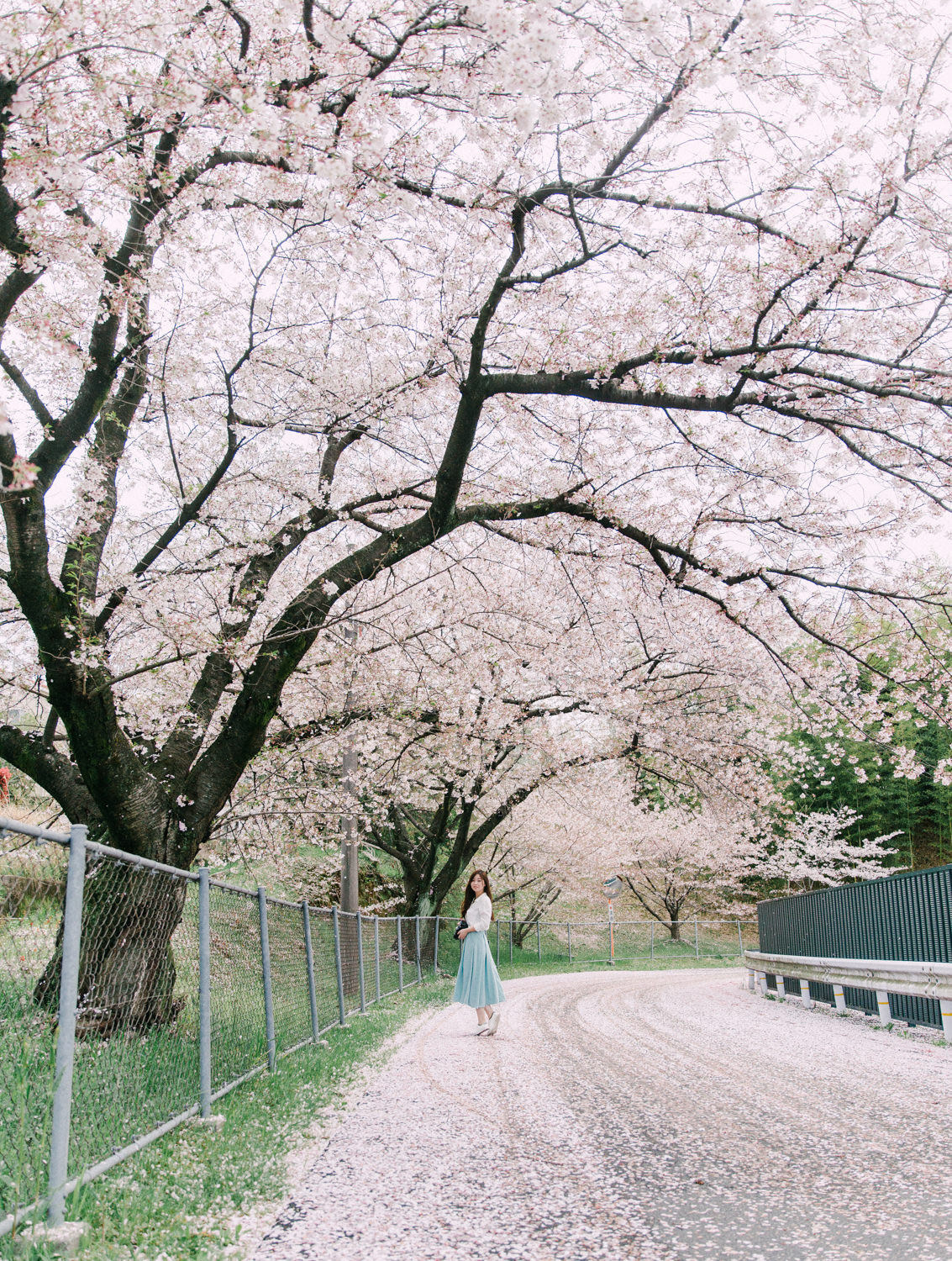 Best_Kyoto_Cherry_Blossom_Photoshoot_Location_by_CHYMO_&_MORE_Ph