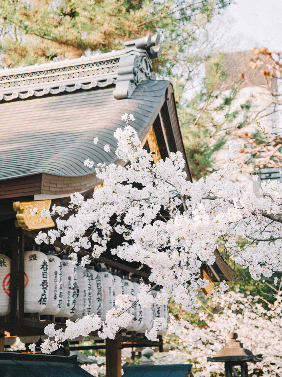 Cherry_Blossom_Pre_Wedding_Photo_Kyoto_by_CHYMO_&_MORE_Photograp