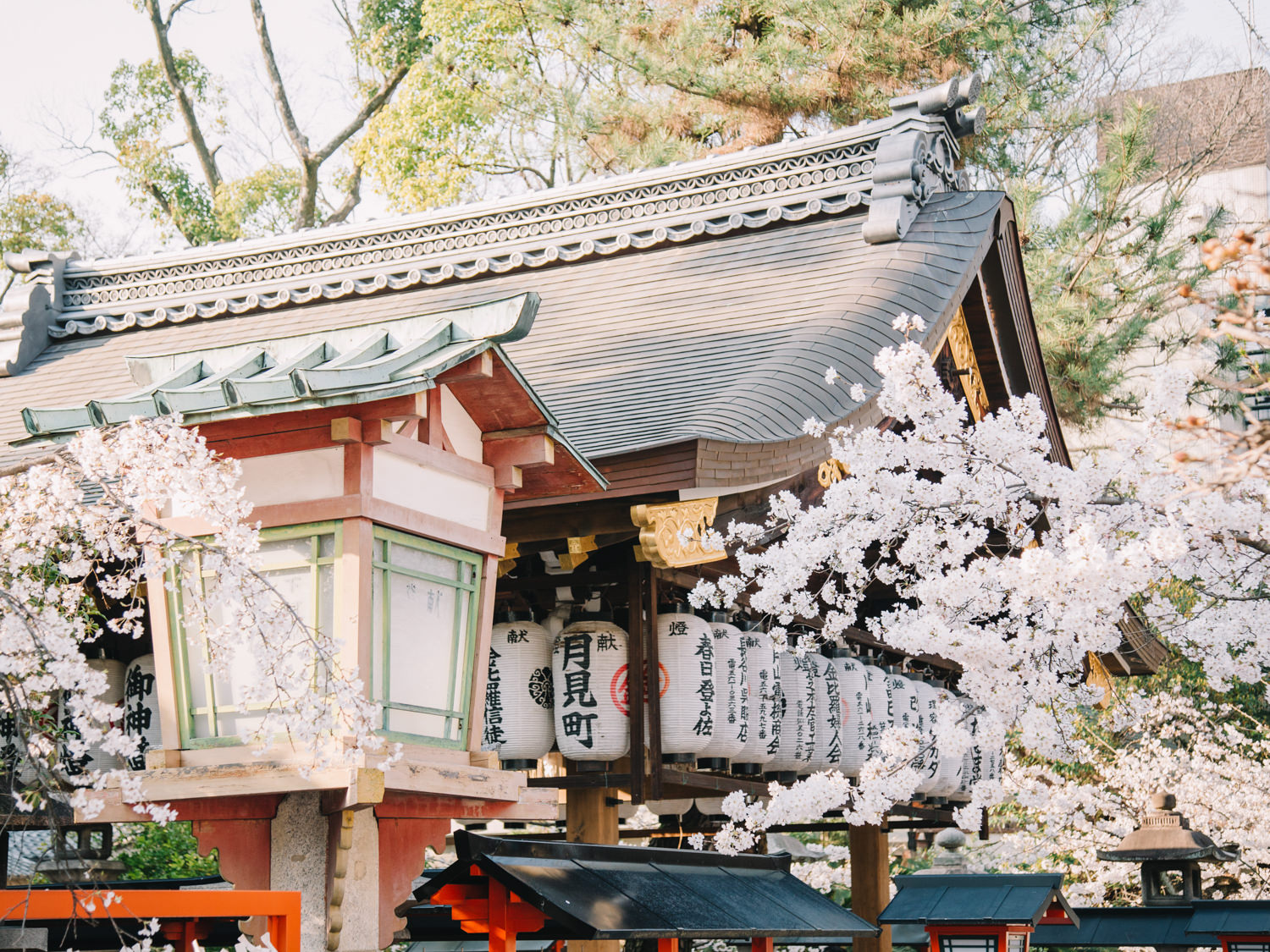Kyoto_Cherry_Blossom_Engagement_Session_Location_Guide_by_CHYMO_