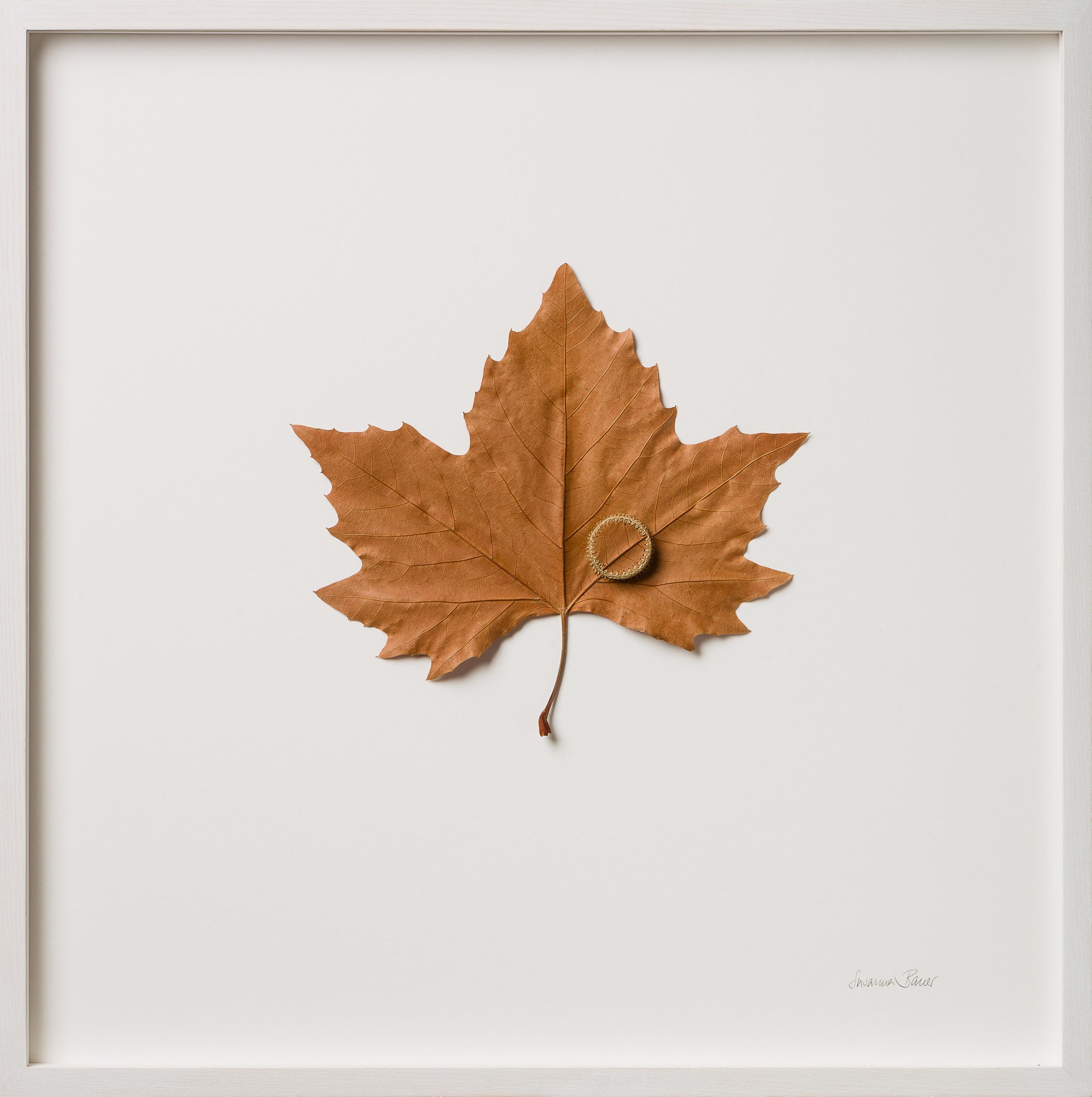 Heart   52 H x 52 W cm  platanus leaf, cotton yarn  £ 750