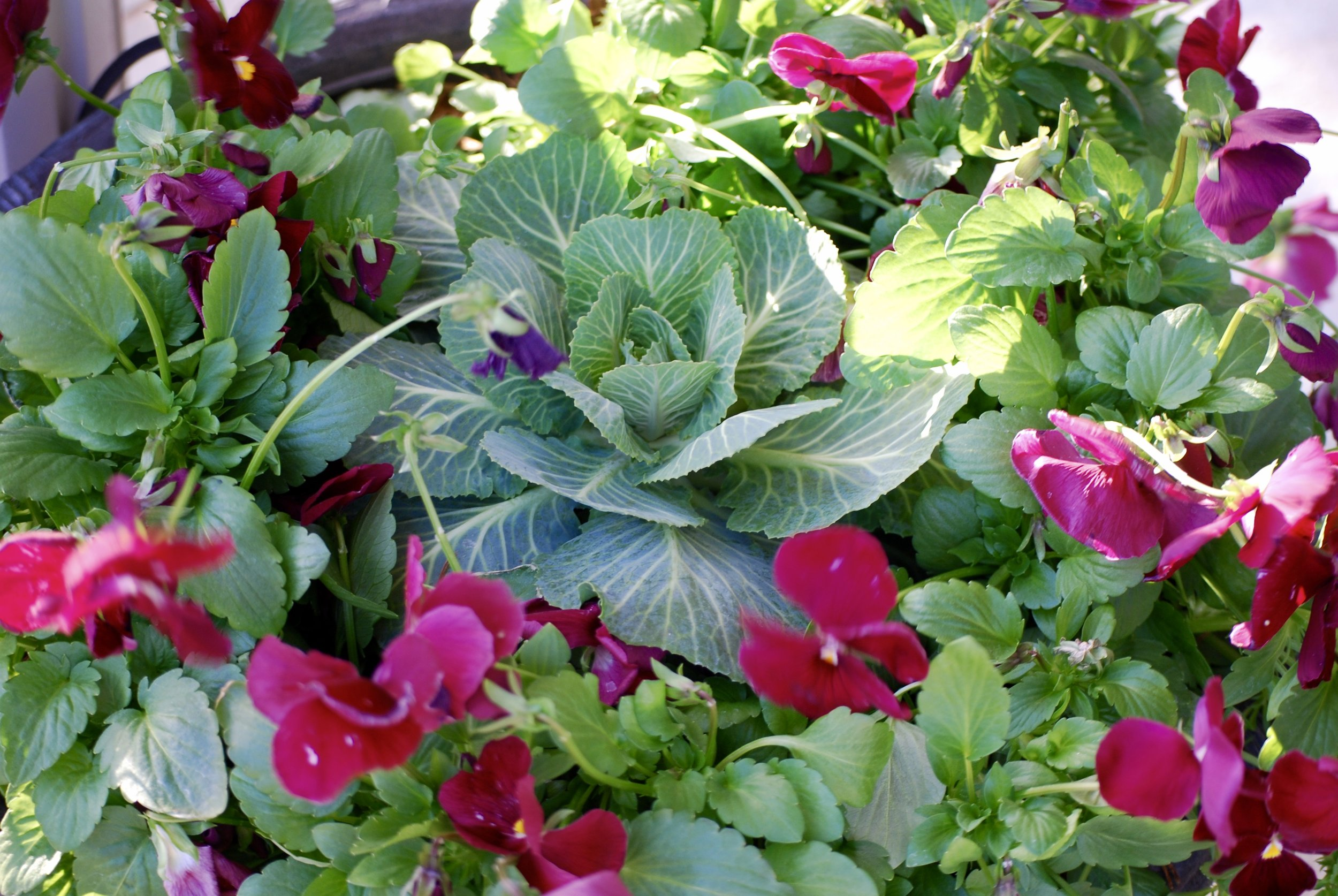 It's all about the curb appeal  So, what's the big deal about container gardening anyway and why do I love it? Three words: INSTANT CURB APPEAL. Container gardening is an easy, inexpensive way to create an attractive, welcoming first impression for your home or business. Custom containers gardens that match your style and personality will wow your friends and customers and offer beauty and a pop of color. And we all know the old saying, you don't get a second chance to make a first impression.
