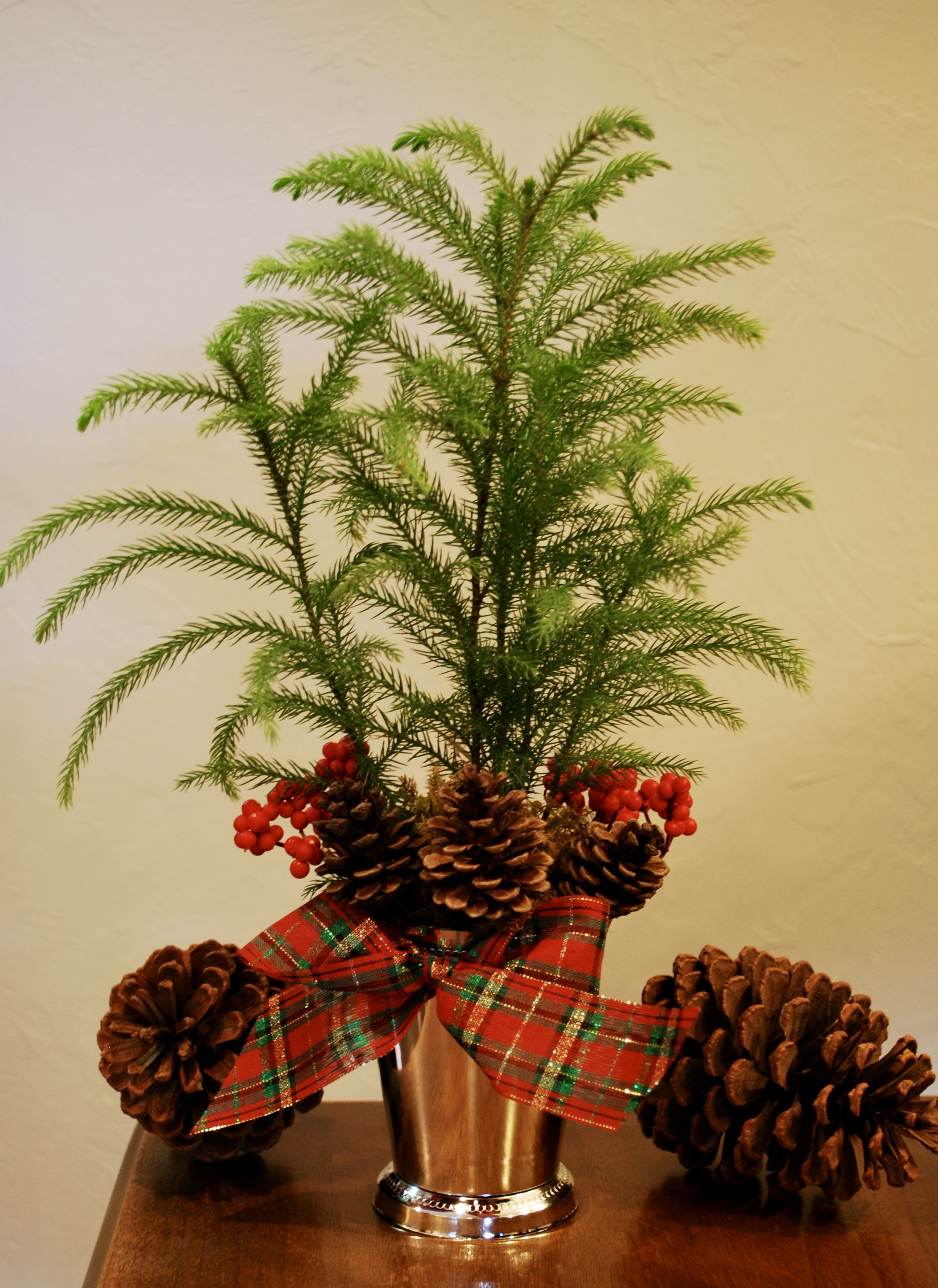 """Cute holiday gifts   If you are looking for a unique hostess gift or teacher gift do we have something for YOU! How cute is this little norfolk pine all dressed up for the holidays in a """"silver"""" mint julep cup?!?! It's the perfect seasonal touch near a kitchen sink or in a powder room and we are quite sure you need one or two or three. Give us a shout if we can pot one up for you. $15 /each."""