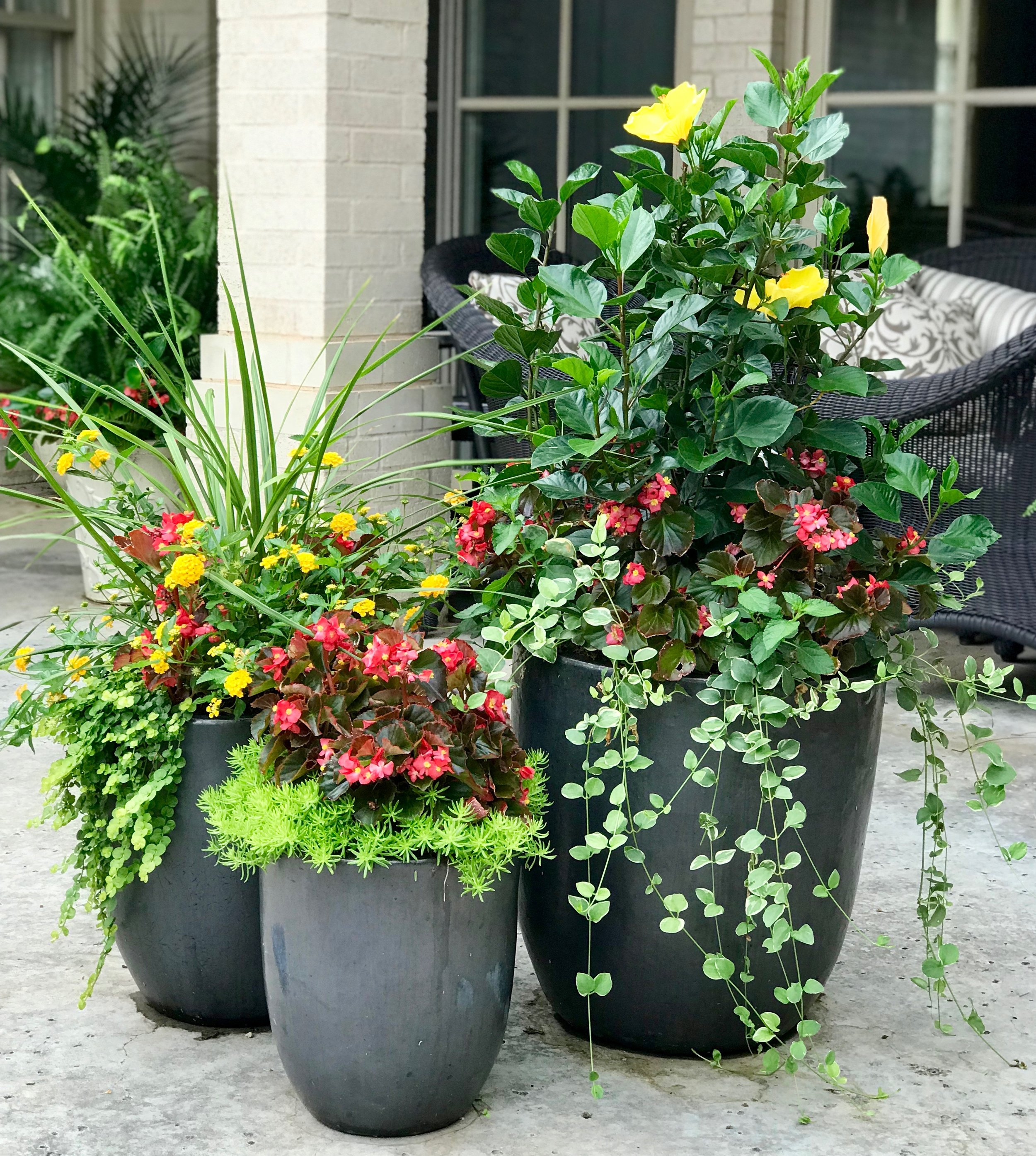 Coordinated color combinations    One of our favorite things about container garden design is the challenge of finding the right mix of colors and textures to put in a container. If you are planting a trio of containers like in this picture or planting containers that are near each other, you will want to coordinate the colors. Here we went with the red and yellow theme. Red leaf begonias are the flowers used in all three and visually ties them together. The yellow pops are hibiscus in the large planter and lantana in the medium sized planter. We love how the three containers blend well together but aren't totally matchy-matchy.
