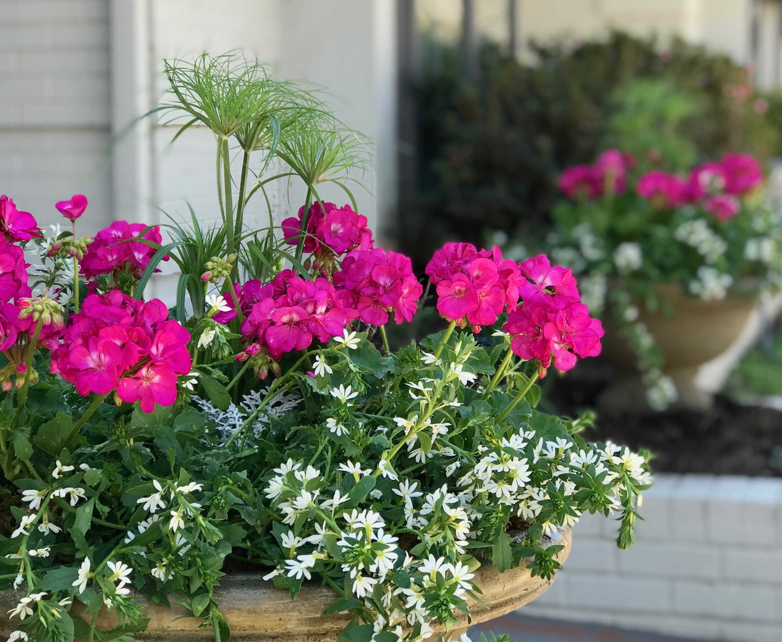 Let Adorn Help You    We all love pretty pots but not necessarily the upkeep, right? Let us know if you'd like to outsource the maintenance of your outdoor planters. Once a month, we'll pay your container gardens a visit to deadhead, trim and treat for garden pests as needed. Our residential and commercial clients REALLY enjoy this monthly service!  We'd love for you to follow Adorn on social media for more container gardening tips and inspiration.   https://www.facebook.com/adornplanters https://www.instagram.com/adornplanters https://www.pinterest.com/adornplanters