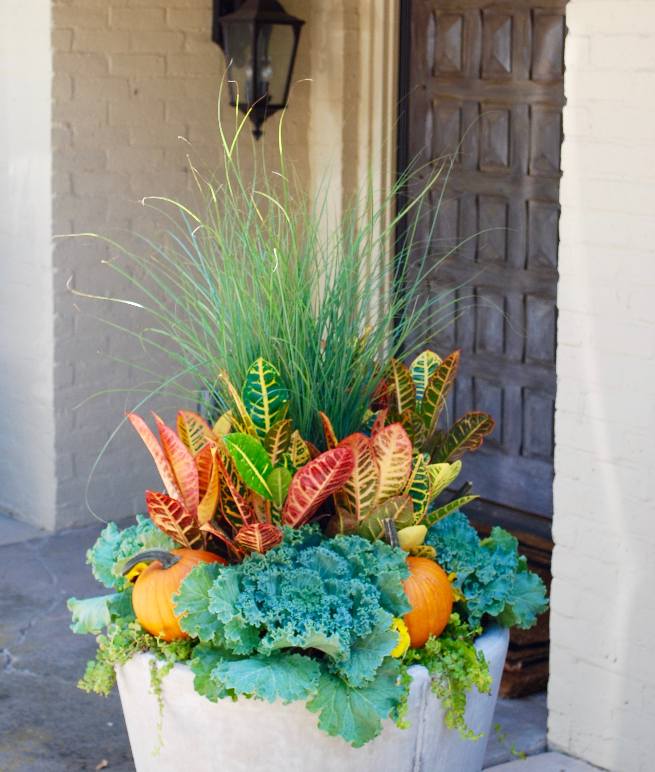 Traditional fall colors   You can't beat traditional fall colors in an outdoor planter. Our go to plants for this warm palette are grasses, crotons, yellow and orange pansies, green cabbage and moneywort. In this picture above we used a green grass as the thriller, but you could also use purple fountain grass if you want to bring a burgundy color into the mix. Our fillers are yellow pansies, crotons, green cabbage and orange pumpkins. Chartreuse moneywort rounds out the arrangement as the spiller.