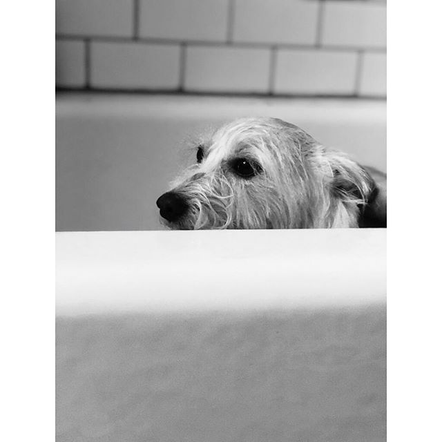 "Bath time: a narrative. ""I feel so... betrayed."" #sadSatsuma"