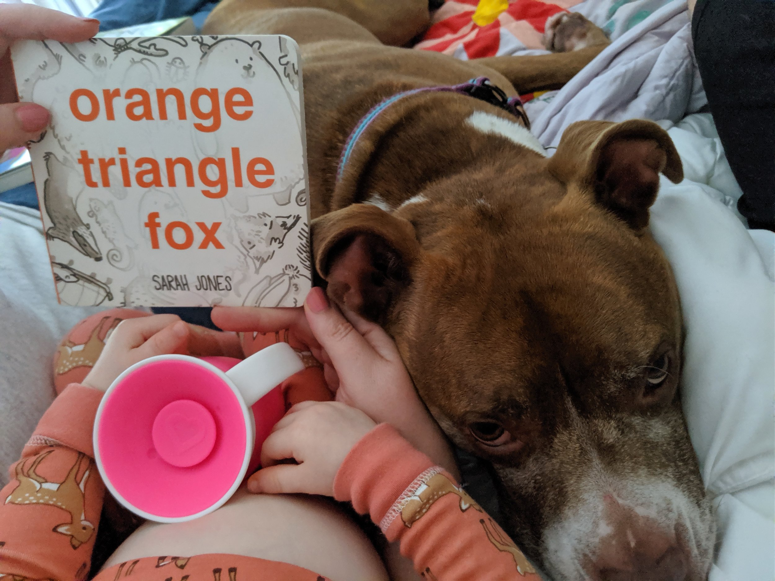 blue manatee press_orange triangle fox_dog picture.JPG