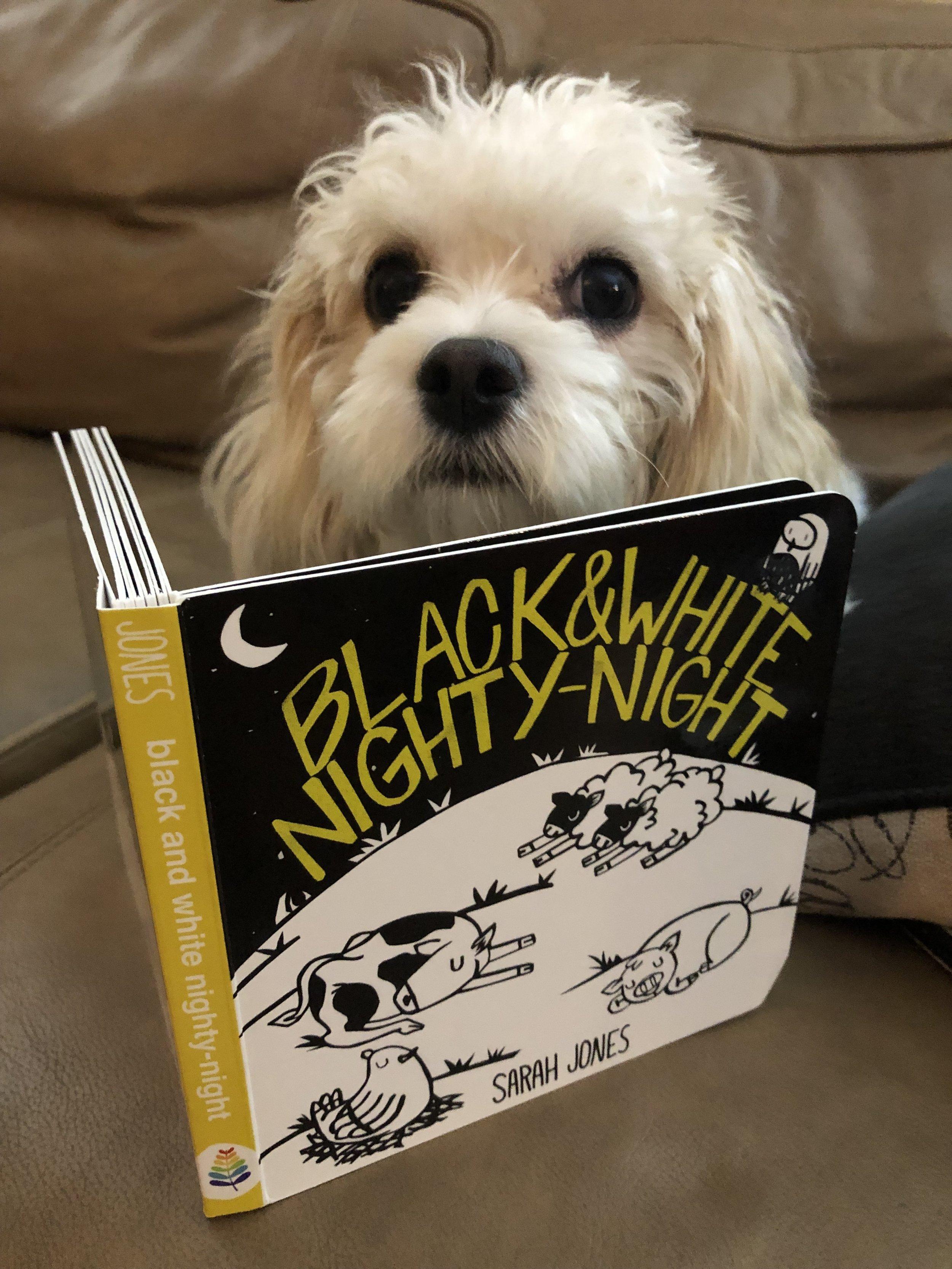 blue manatee press_black and white nighty night_board book_dog(1).JPEG