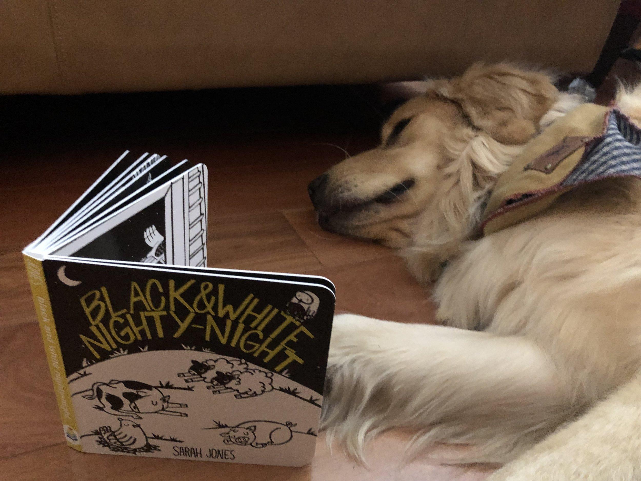blue manatee press_black and white nighty night_board book_dog(2).JPEG