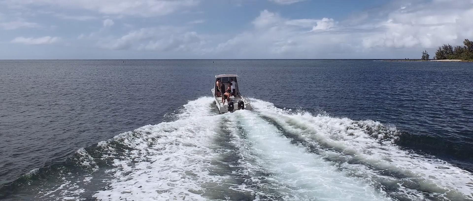 Island View Hawaii Shark Dive