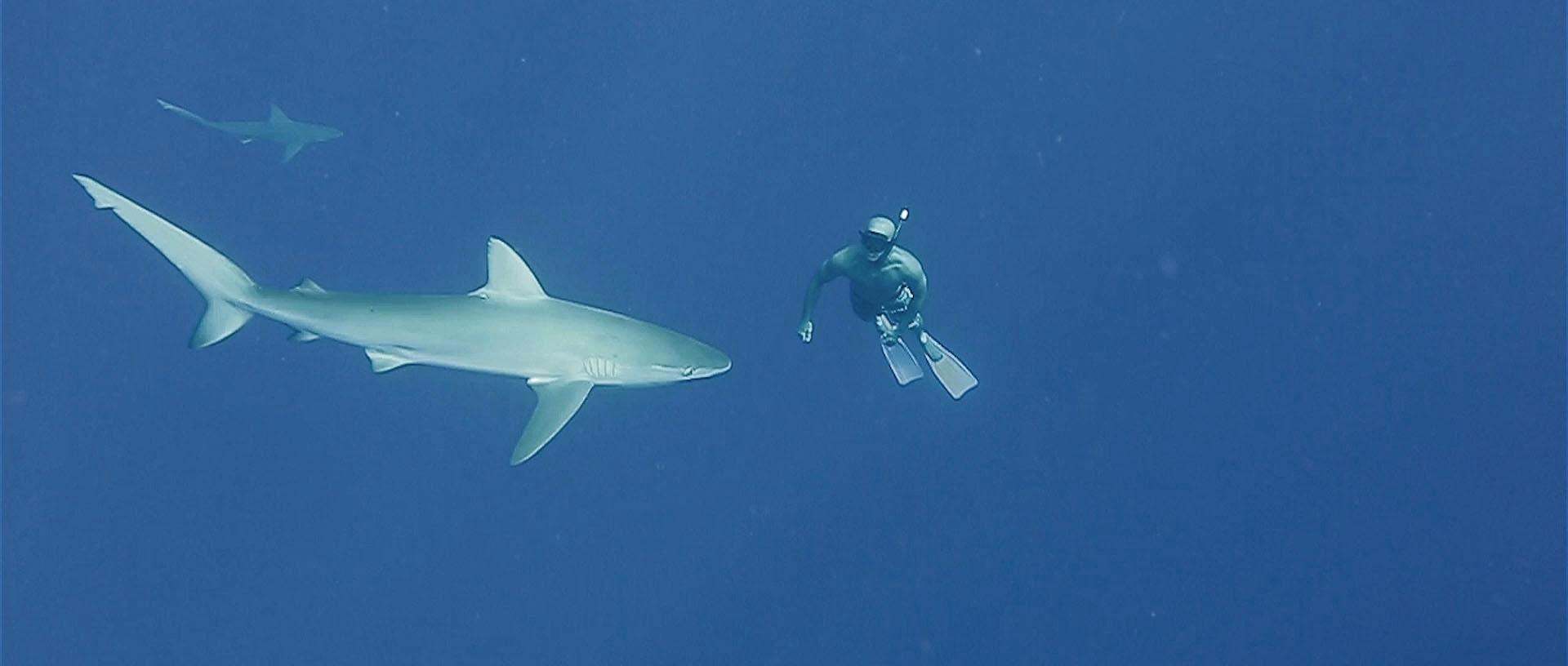 Kaiwi Berry Island View Hawaii Shark Dive