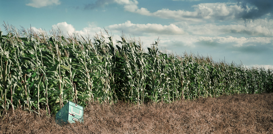 Corn_Field_With_Artefact_version_2_epsontest.jpg