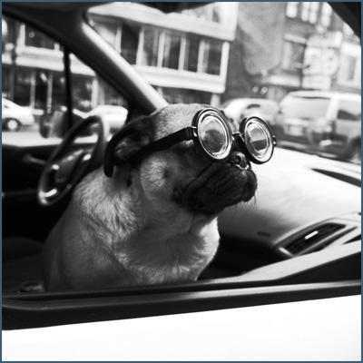 dog-photo.jpg