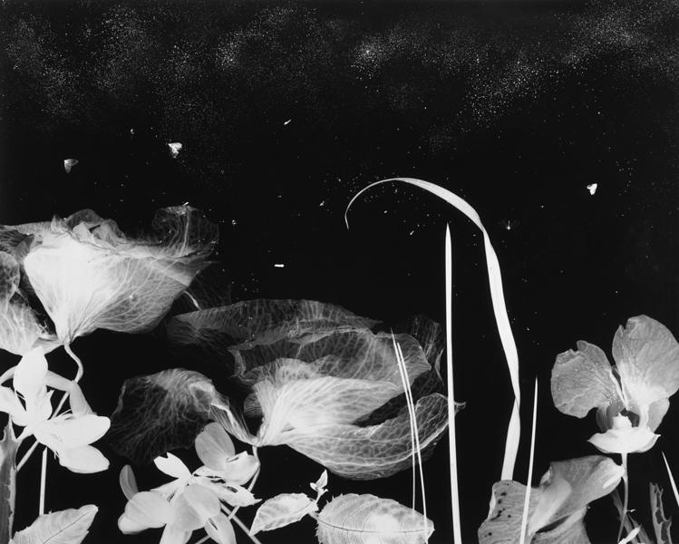 """A night landscape  ,  2000, 30"""" x 40"""", Unique Silver print"""