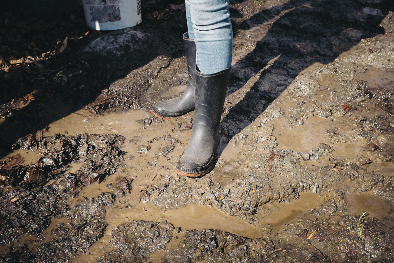 Cbane à sucre Chassé-0414-24.jpg