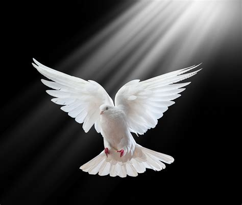 Article IV - Of the   Holy Ghost - The Holy Ghost, proceeding from the Father and the Son, is of one substance, majesty, and glory with the Father and the Son, very and eternal God.