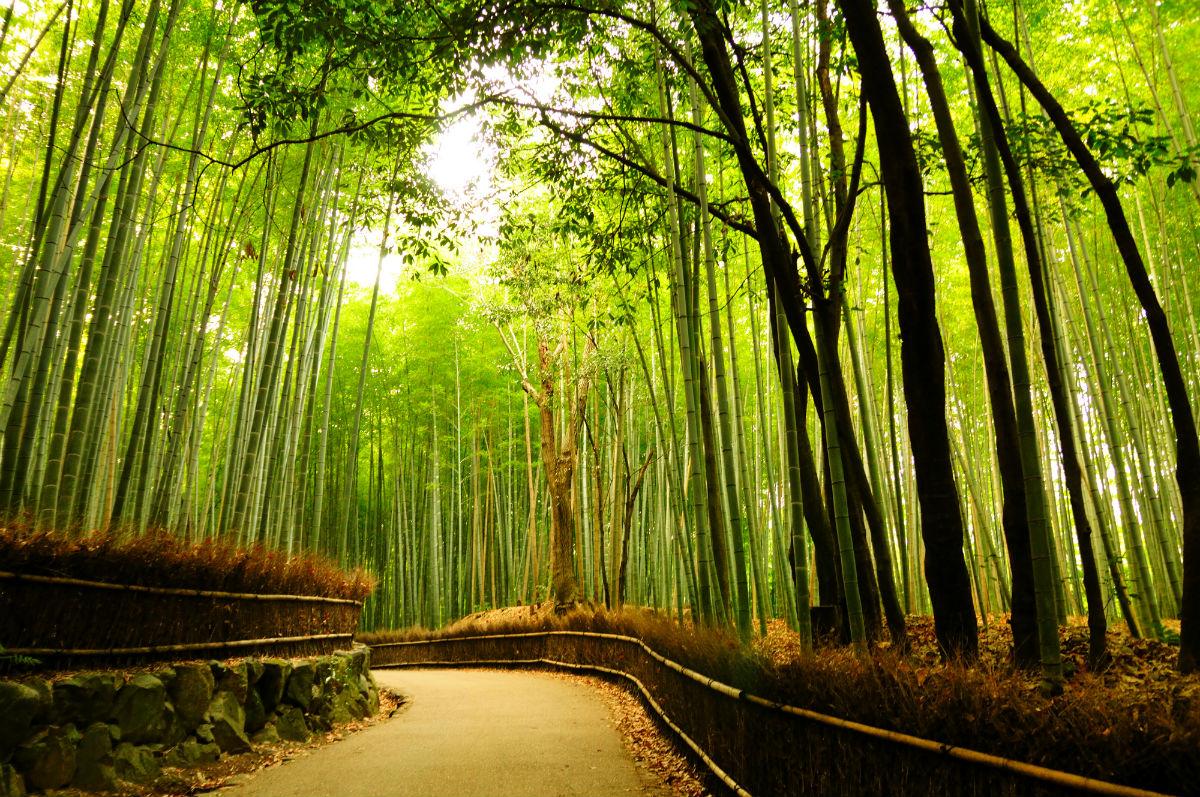 arashiyama kyoto japan .jpeg