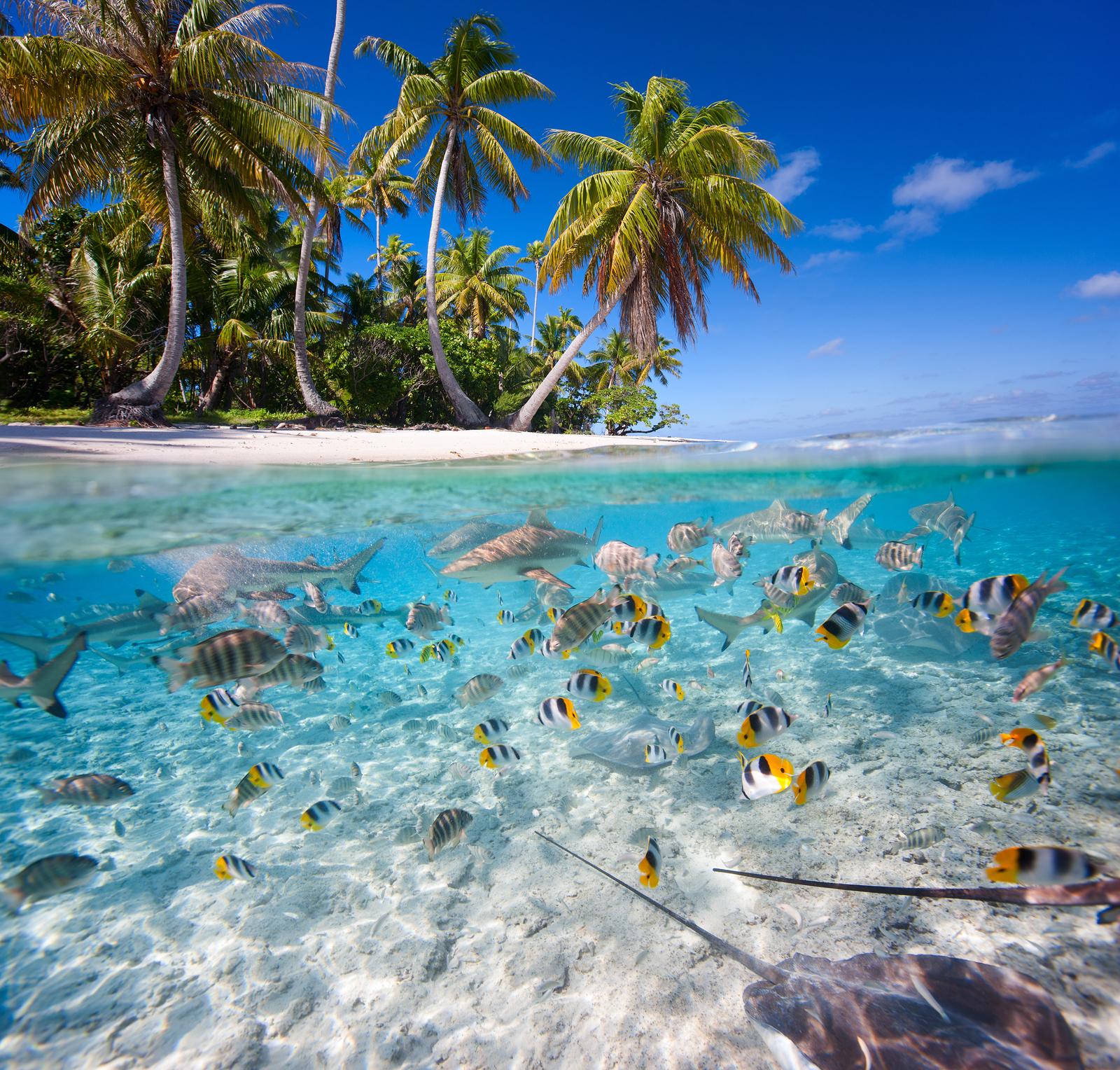 bigstock-Beautiful-tropical-island-unde-59267531.jpg