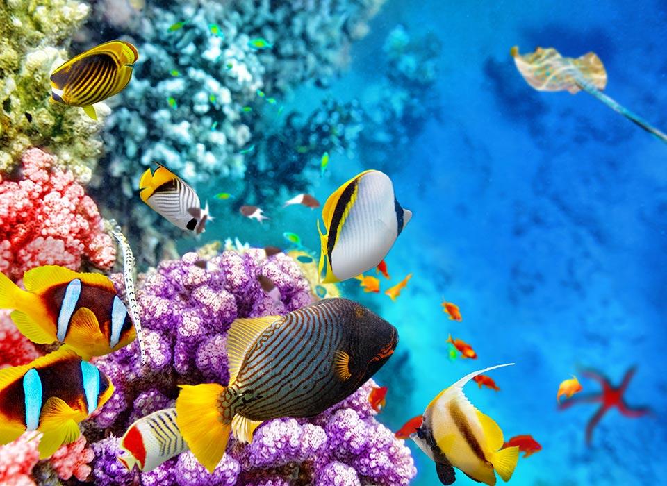 fiji-yacht-charter-ocean-reef.jpg