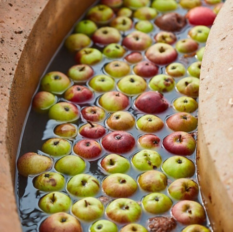 The Newt apples.jpg