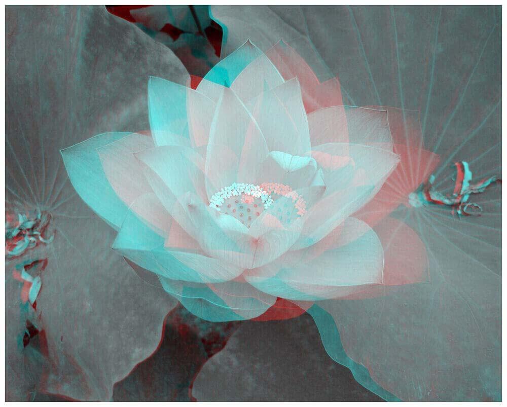 Jewel-Lotus-new.jpg