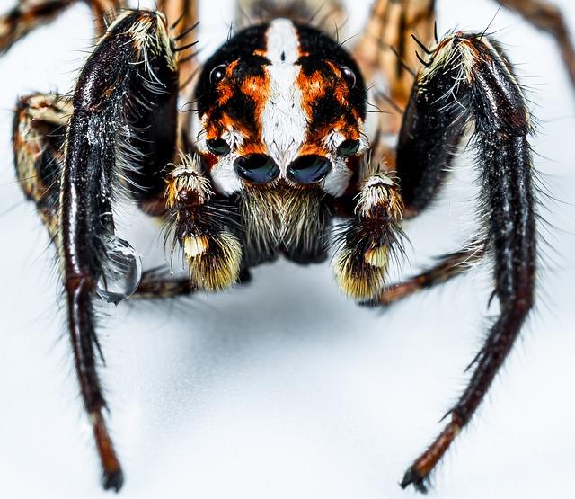 jumping-spider-300436_640.jpg