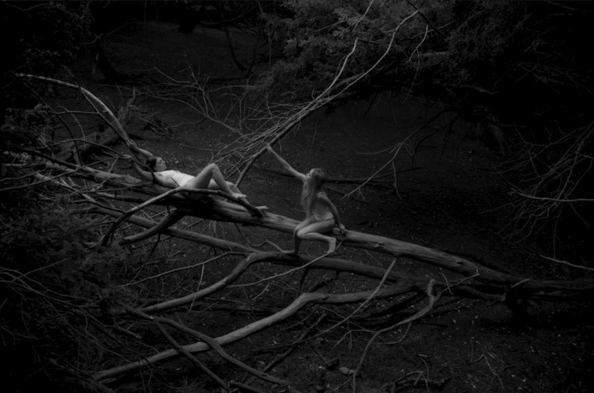 Tree Fairies.jpg