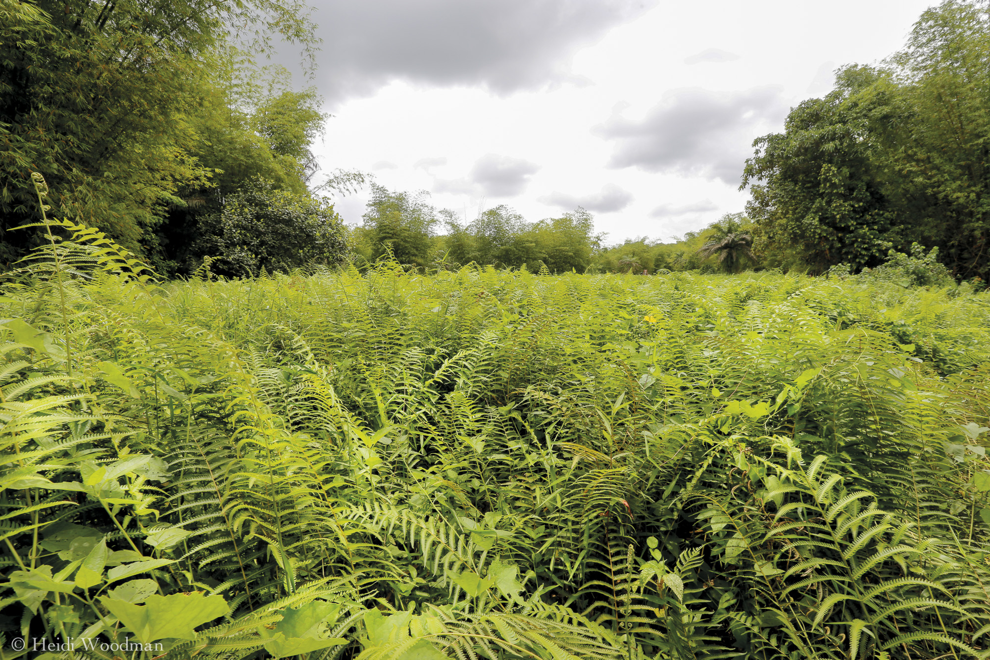 Unspoilt land in Efuanta, next to Galamsey site