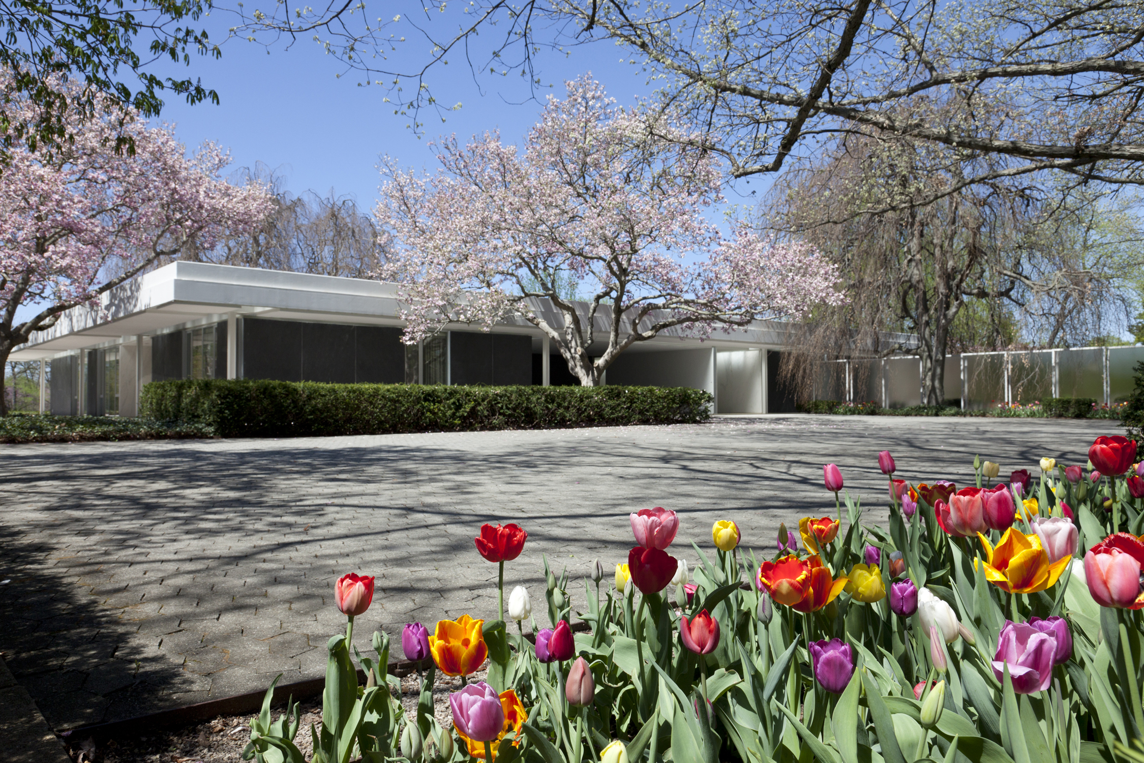 House with tulips lightened.jpg
