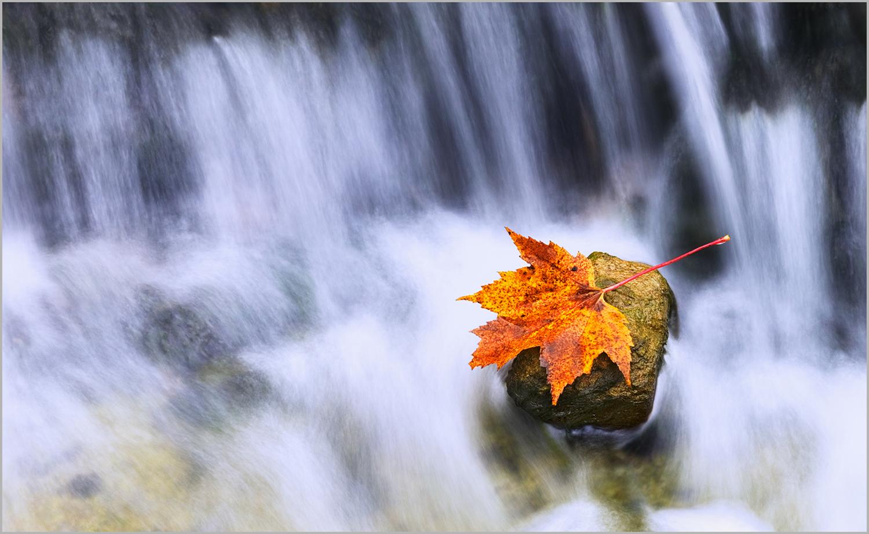 Leaf on rock at AuTrain Falls in Michigan's Upper Peninsula