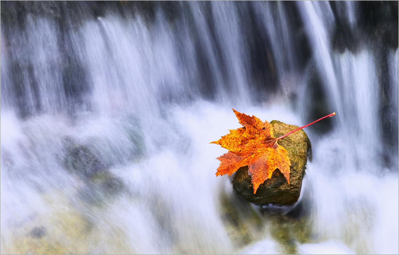 A fallen leaf lies on a rock in AuTrain Falls in Michigan's Upper Peninsula