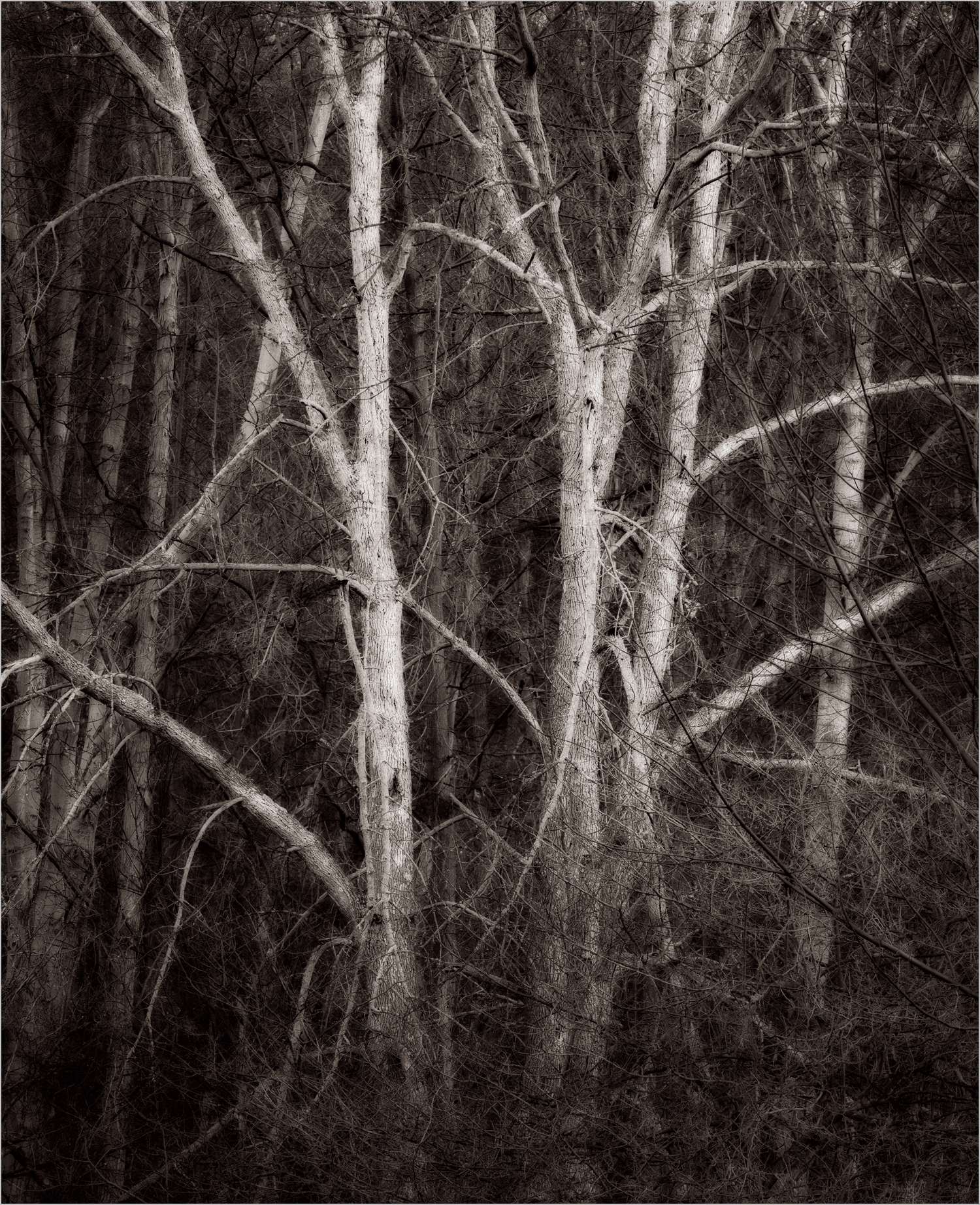 Trees In Moraine State Park    © Howard Grill