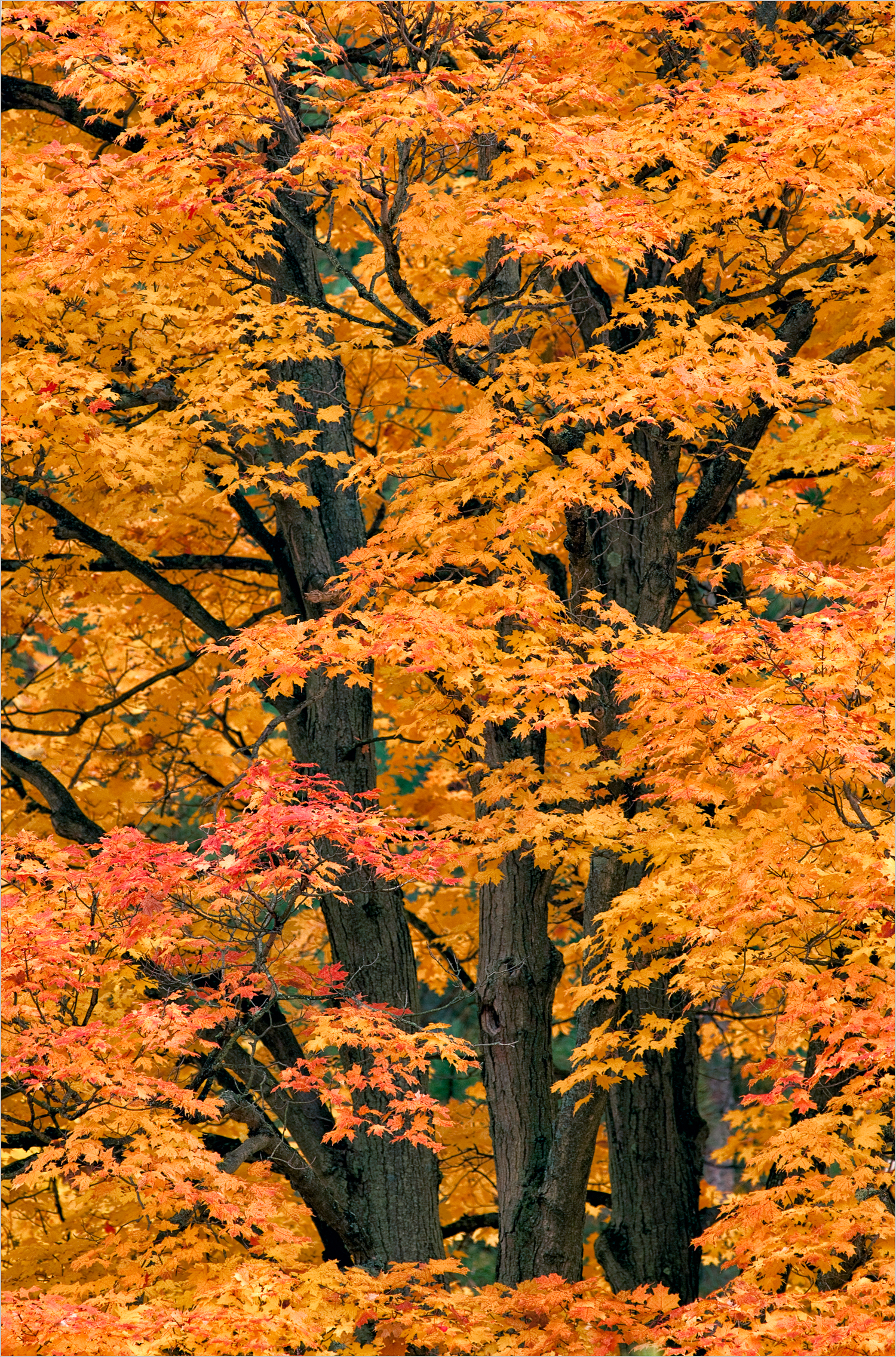 Fall Foliage In Cuyahoga National Park    © Howard Grill