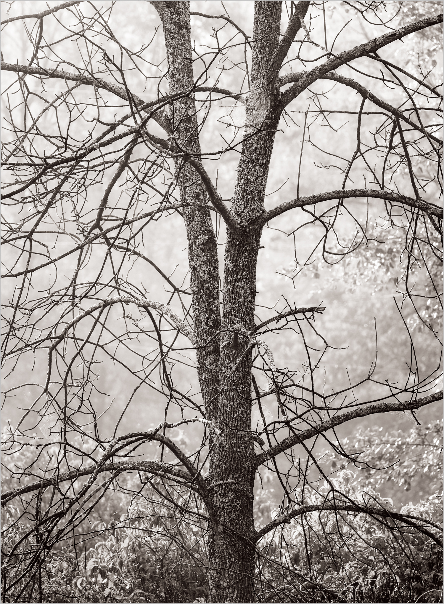 Trees In The Mist, Moraine State Park  © Howard Grill