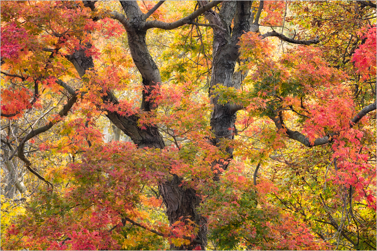 Fall Trees In The Cemetery  © Howard Grill