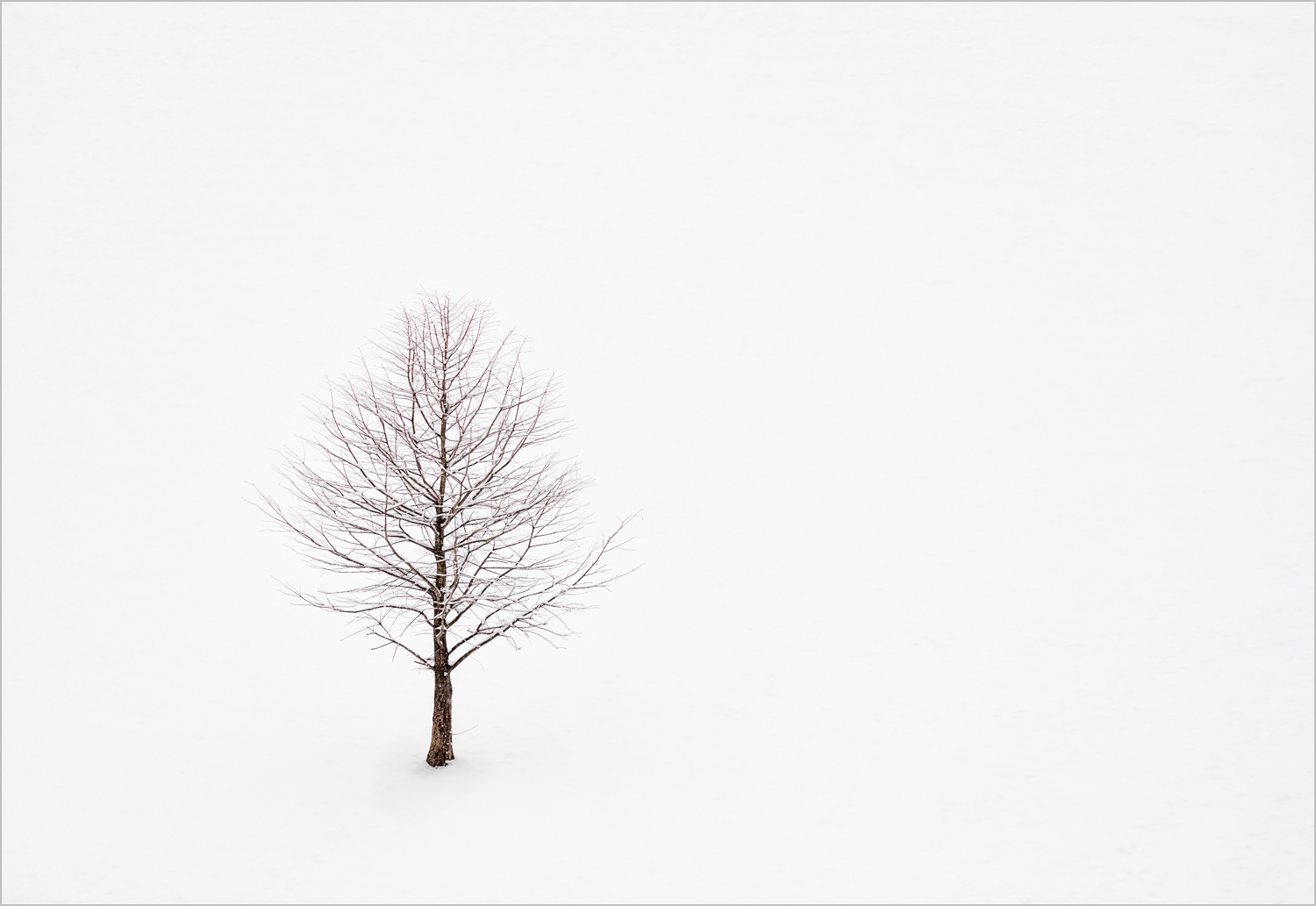 Tree In Snow    © Howard Grill