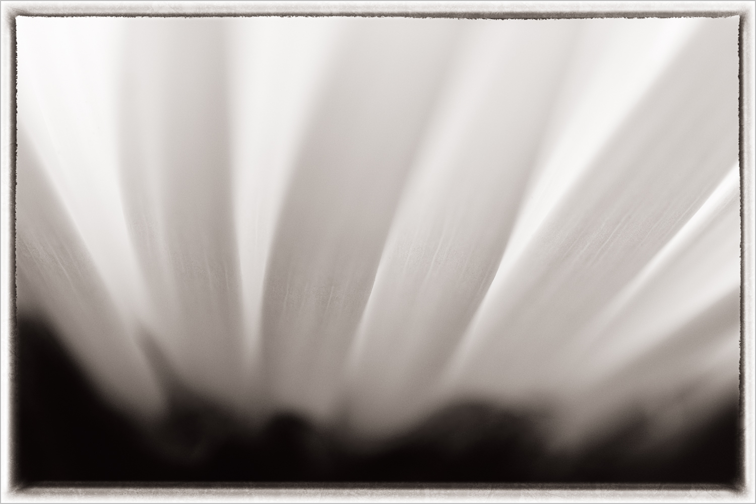 The not so obvious base image of a flower   © Howard Grill