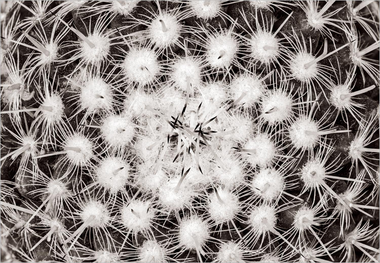 Cactus   © Howard Grill