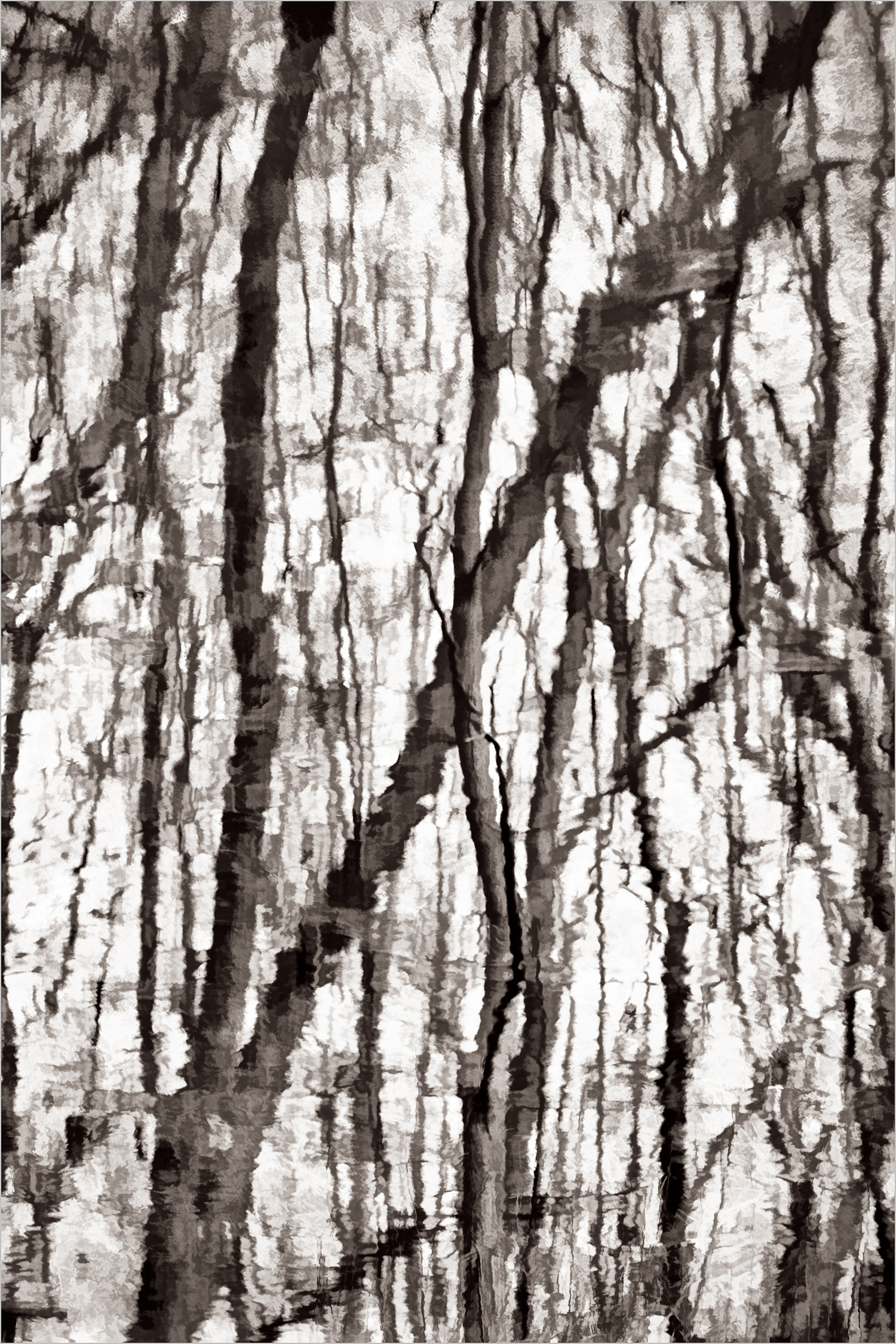 Tree Reflections In Black And White    © Howard Grill