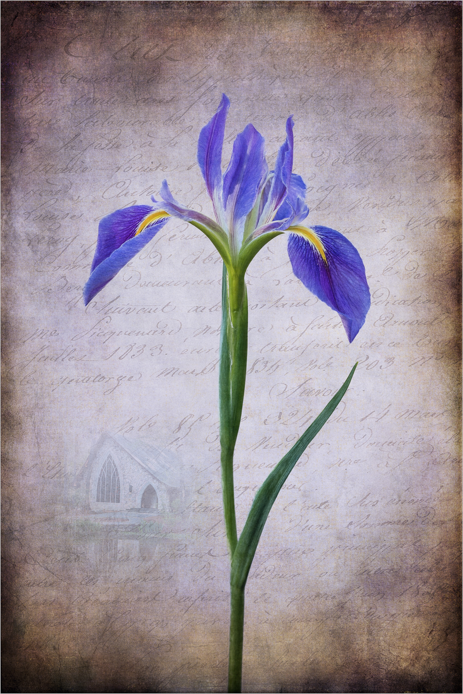 Iris and Chapel    © Howard Grill