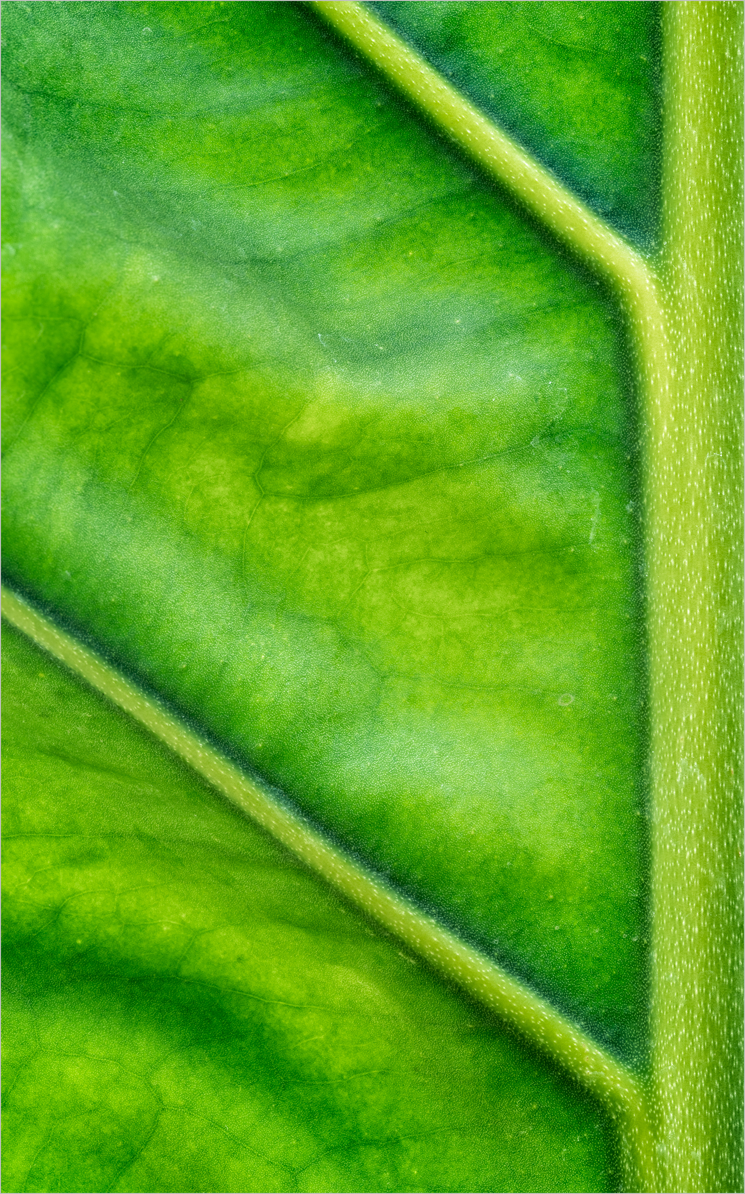 Leaf Macro I © Howard Grill