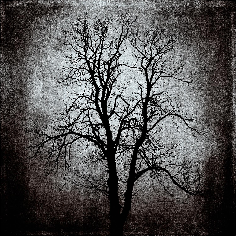textured tree.jpg