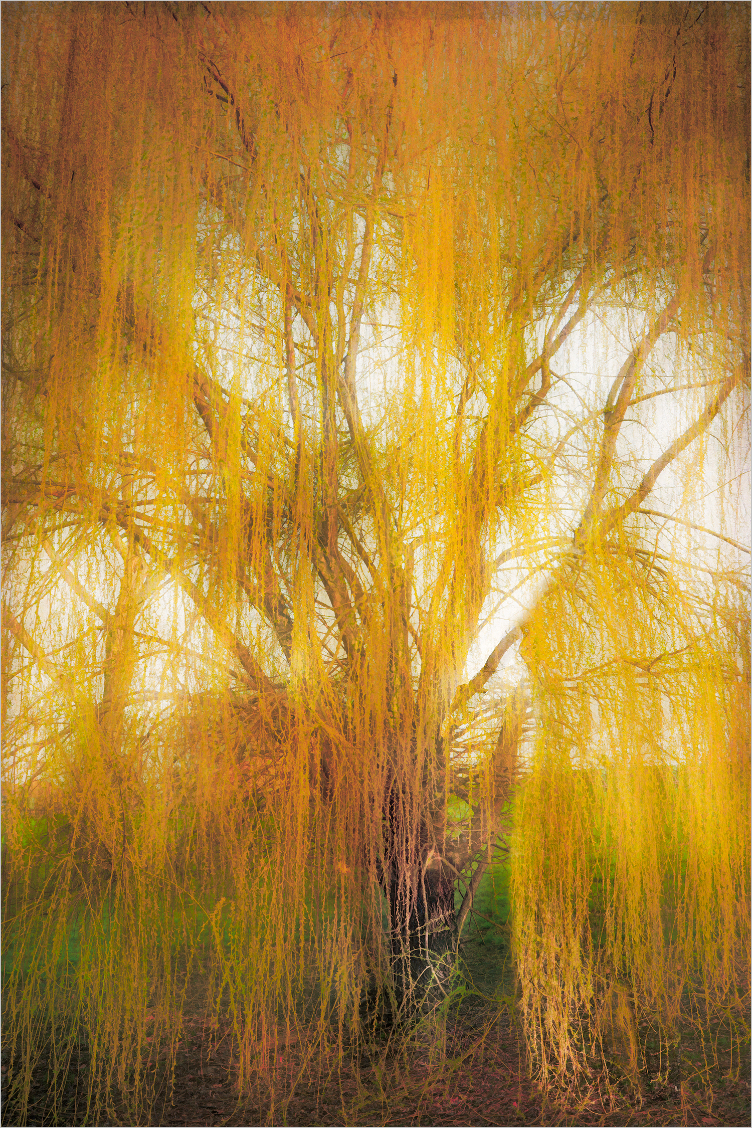 """Weeping By The Willow"" © Howard Grill"