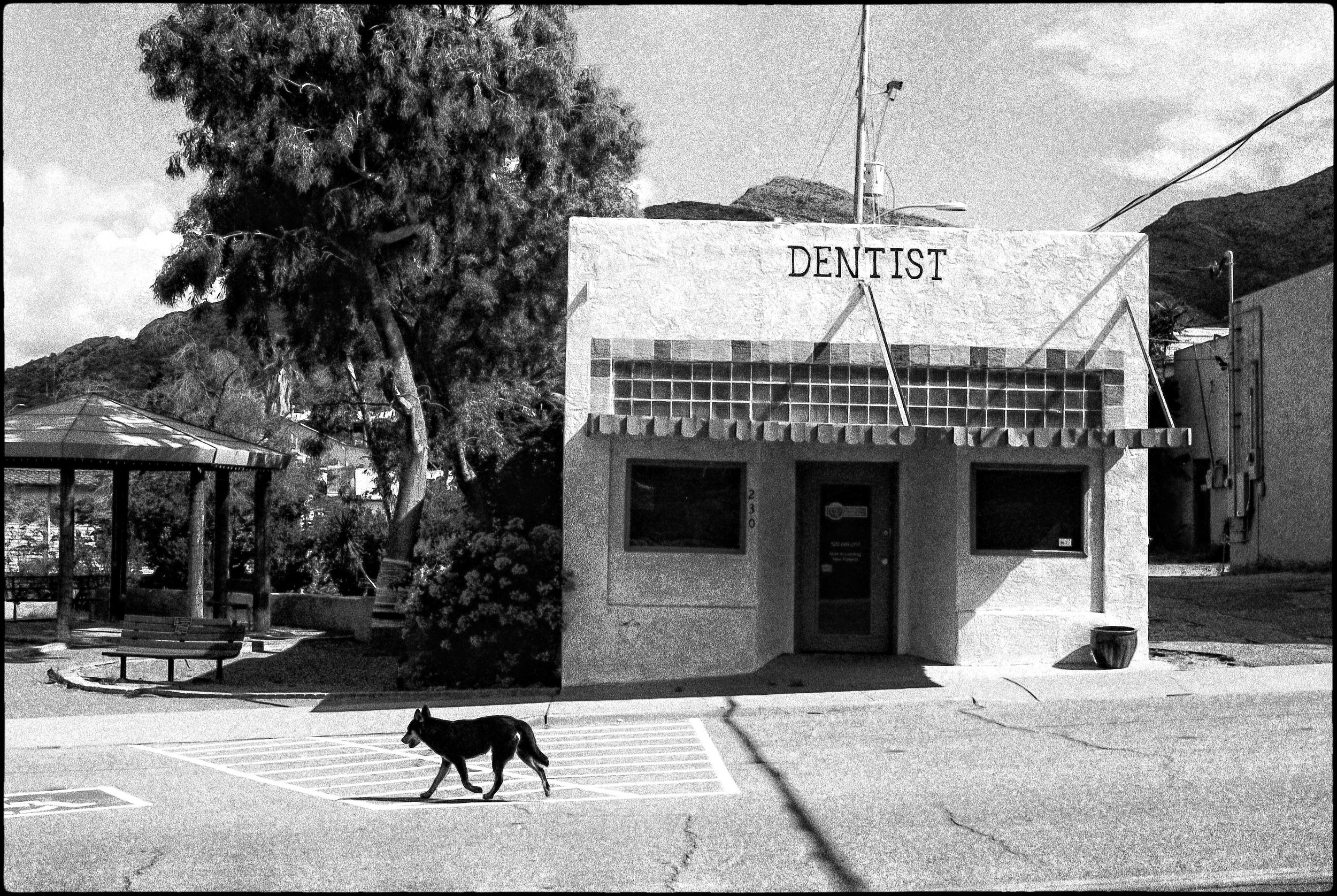 Dog & Dentist II