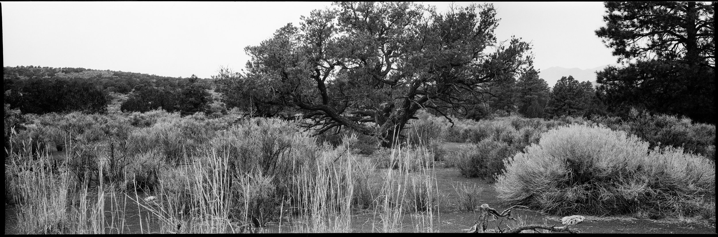 Grass, Black Sand, & Tree II