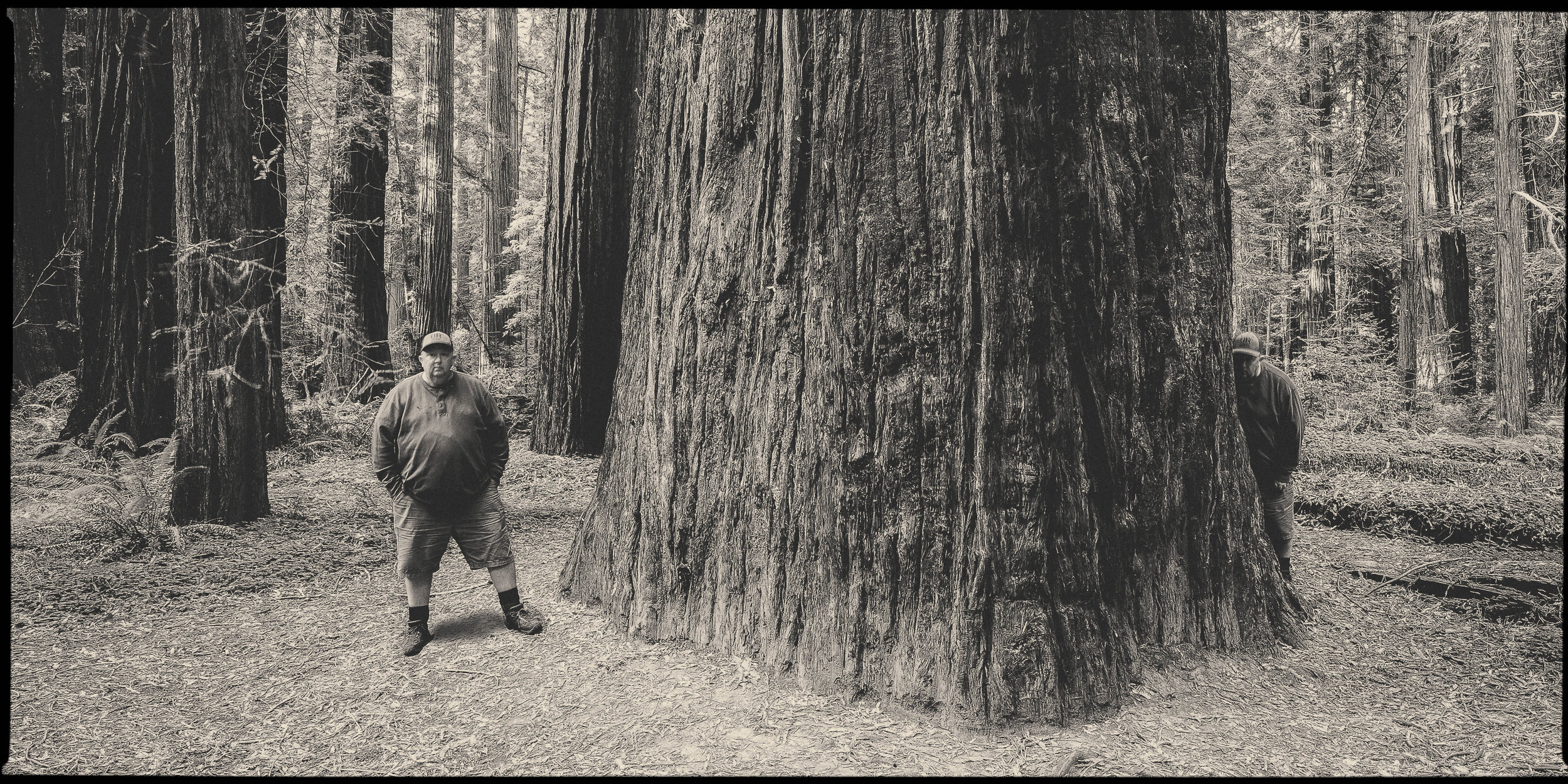 Time Traveller; Humboldt Redwoods State Park, California USA