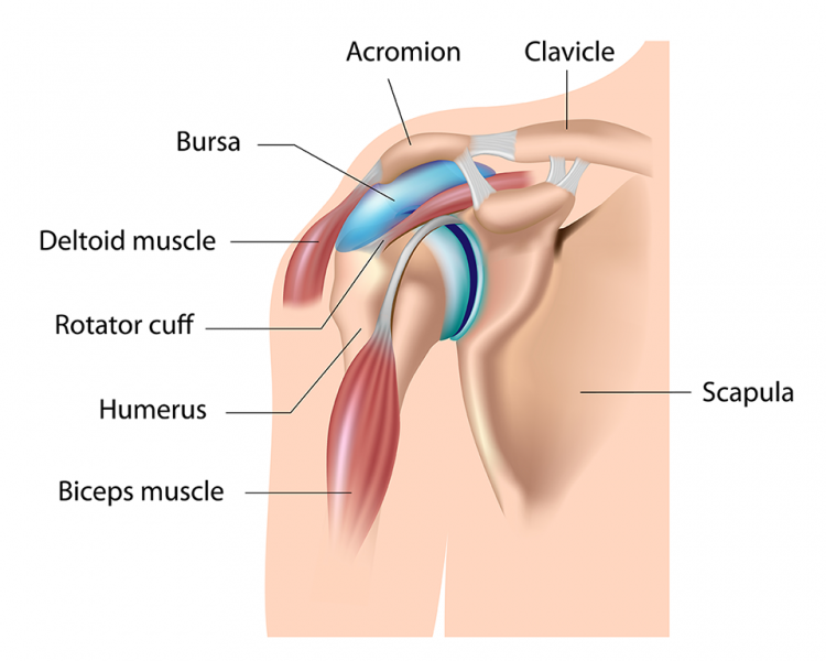 Shoulder-Bursitis.png