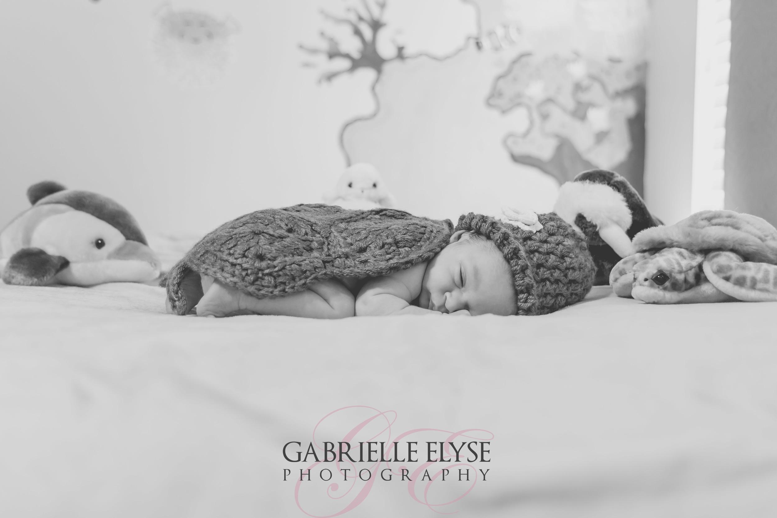 newborn turtle raleigh florida