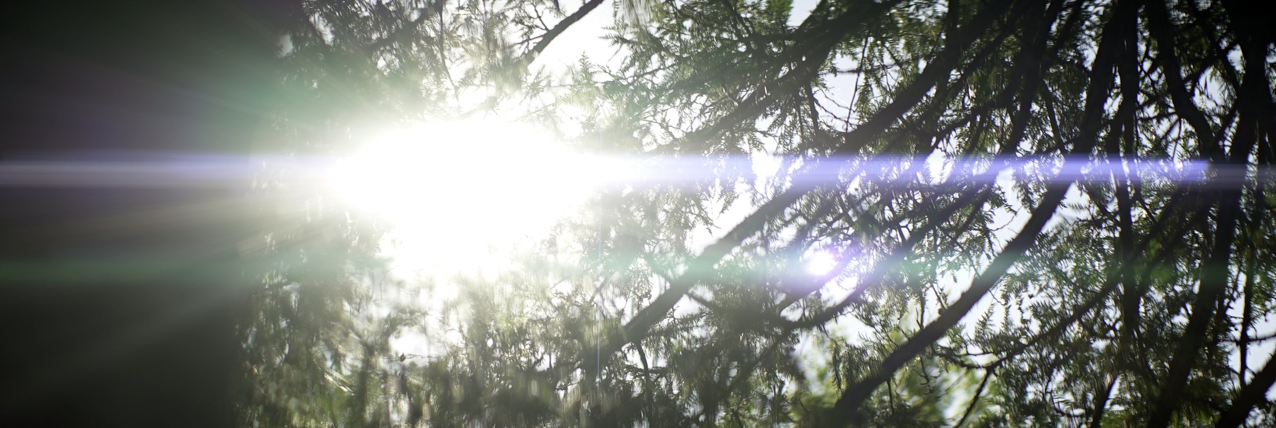 Lomo 100mm anamorphic lens | Sun-flare through some trees at the north end of Mackinac Island, MI. Photo by: Keith Nickoson